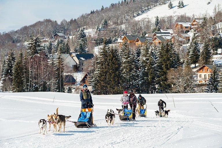 chiens de traineaux - Olivier HUMEAU (1).jpg