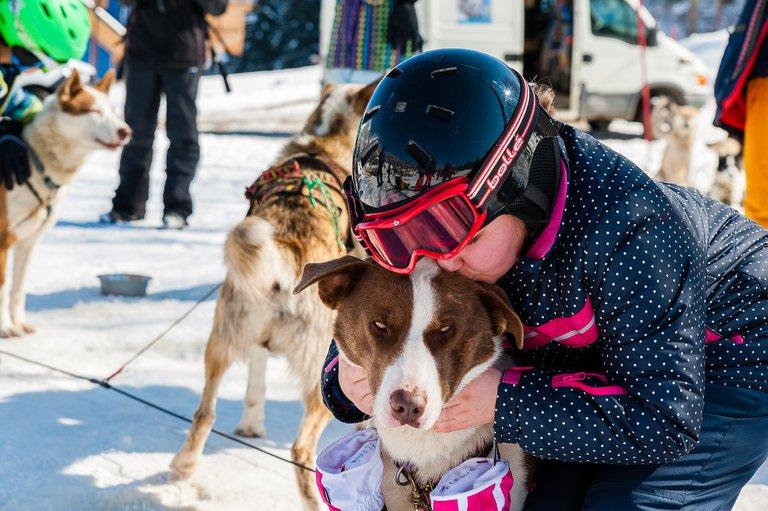 alpe du grand serre chiens de traineaux-Olivier HUMEAU.jpg