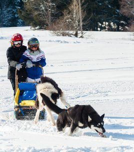 Introduction to the sledging dog driving